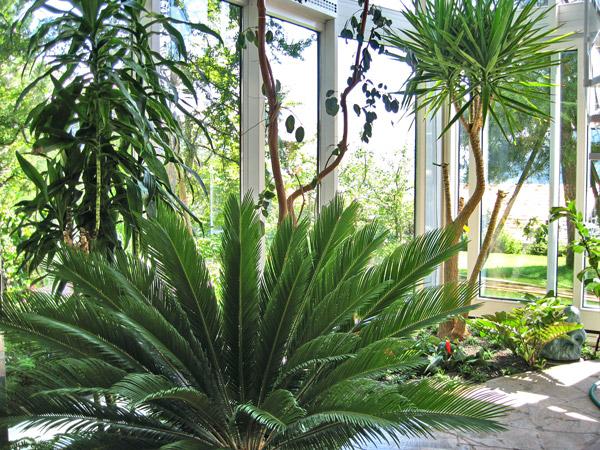 Wintergartenbepflanzung